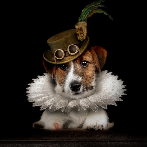 DOGS in HATS® Photo Session (includes Canvas)