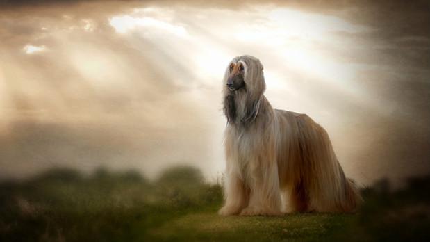 Carrie Southerton Dog Photography pet photographer falkirk scotland edinburgh stirling dun