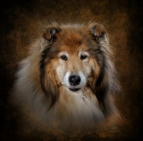 pet photography dog photographer carrie southerton dog Photography