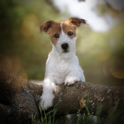 Carrie Southerton Dog Photography pet photographer scotland edinburgh
