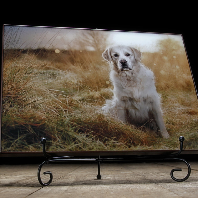 Carrie Southerton Dog Photography - The Edge