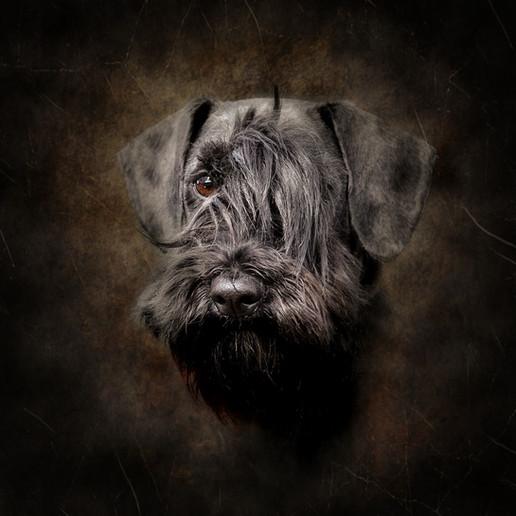 Dog photography near me falkirk stirling edinburgh dundee