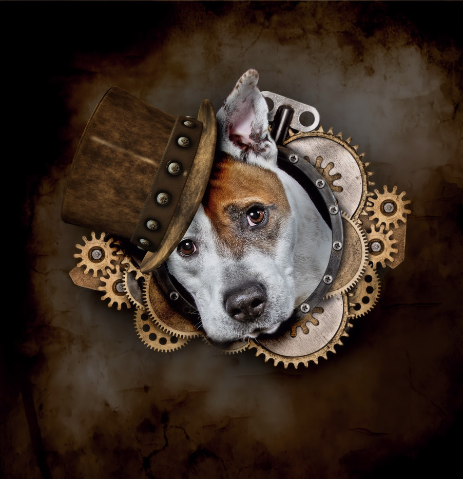 DOGS in HATS by Carrie Southerton Dog Photography Studios