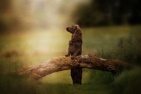Carrie Southerton Dog Photography pet photographer falkirk