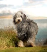 Pet Photographer Falkirk Scotland