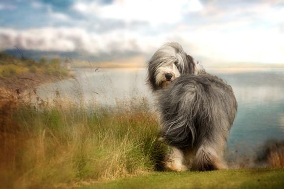 Pet Photographer near me Falkirk Dog Photography