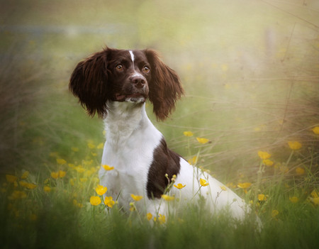 Carrie Southerton Dog Photography pet photographer falkirk scotland