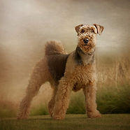 Carrie Southerton Dog Photography 21.jpg