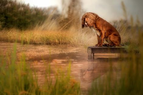Carrie Southerton Dog Photography pet photographer near me falkirk edinburgh glasgow stirl