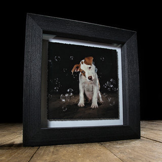 Carrie Southerton Dog Photography - Fine Art Float Frame
