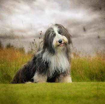 Pet photographer near me dog photography falkirk scotland