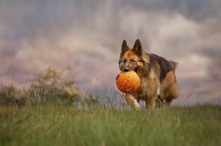 Carrie Southerton Dog Photography falkirk pet photography