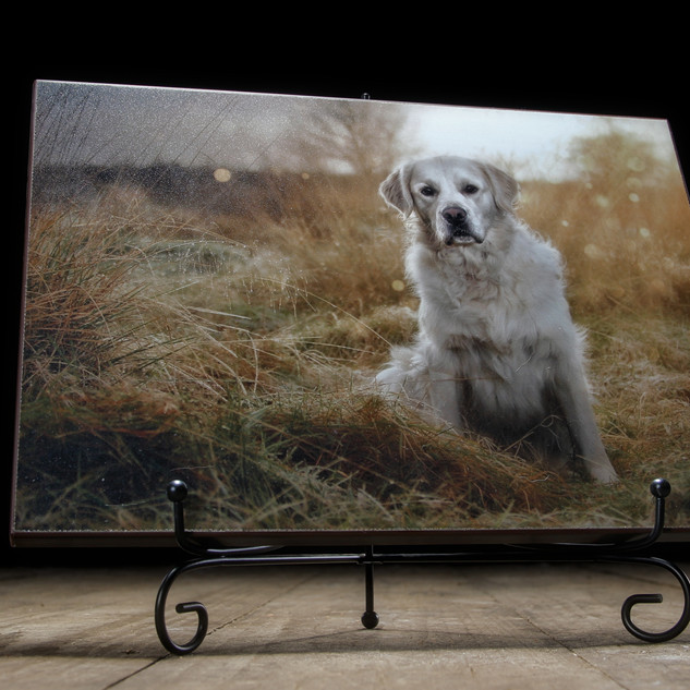 Scotland's Premier Dog Photography Studio