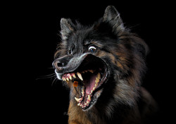 Carrie Southerton Dog Photography 11