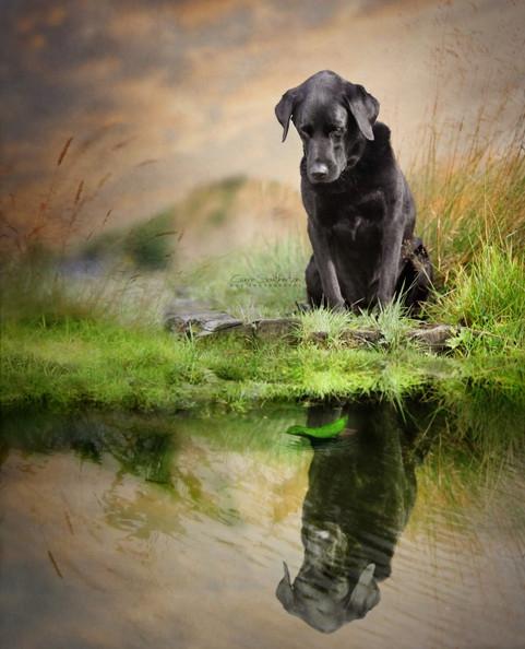 dog photography studio near me pet falkirk.jpg