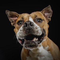 Carrie Southerton Dog Photography 10