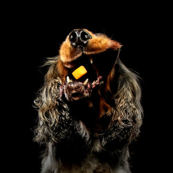 Carrie Southerton Dog Photography 6