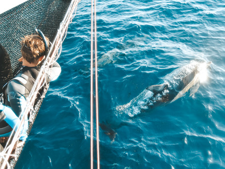 Swimming With Wild Dolphins; A Life Changing Experience!