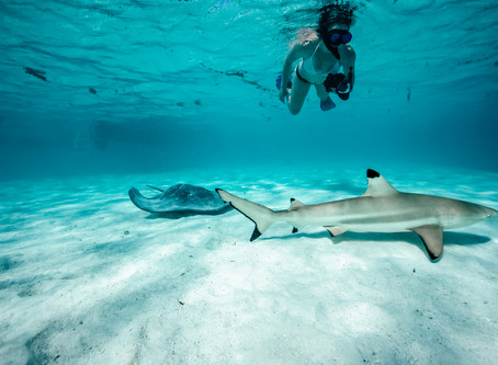 Having A Play With The Sharks And Rays!