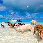 bahamas-ferry-day-trip.jpg