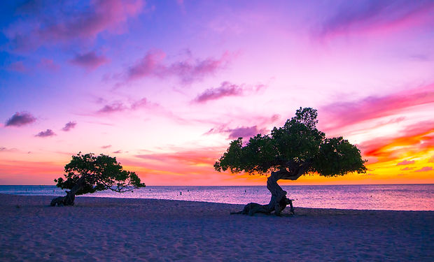 Beautiful divi divi trees at sunset on b