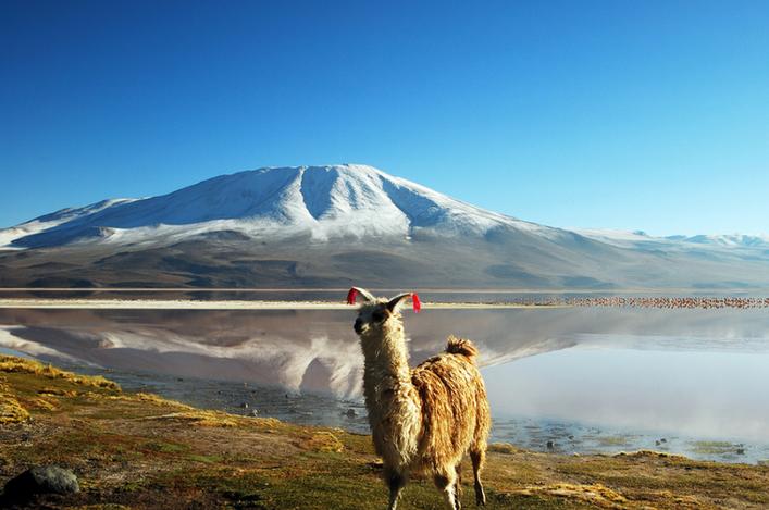Altiplano, Bolivy