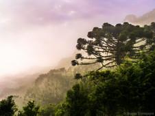 Atlantik Yağmur Ormanları, Brezily