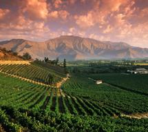 Şarap bağları, Mendoza, Arjantin
