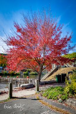 Red Tree, Blue Sky
