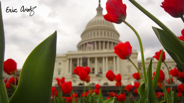 The US Capitol in Spring