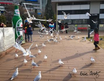 A Squabble of Gulls Take Flight