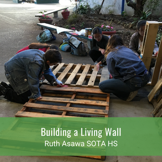 Building a Living Wall