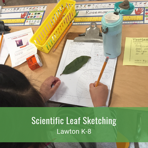 Scientific Leaf Sketching
