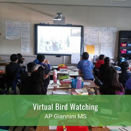 Virtual Bird Watching