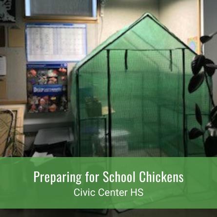 Preparing for School Chickens