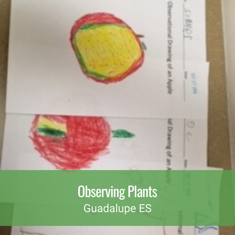 Observing Plants