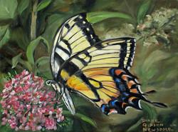Butterfly Nectar