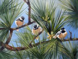 Chickadee Times Three