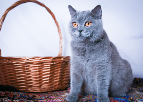 Cat20 edit.jpg