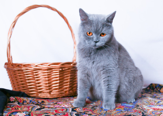 Cat15 edit.jpg