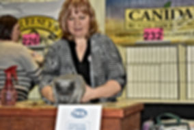 Cat Show British Shorthair