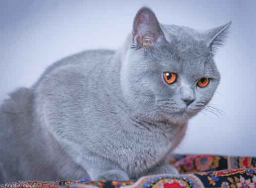 Cat27.jpg