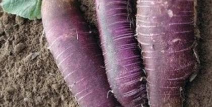 "Gartenrettich ""Violetter langer Winter"""