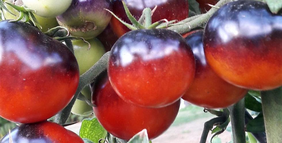 "Tomate ""Black Lady"""