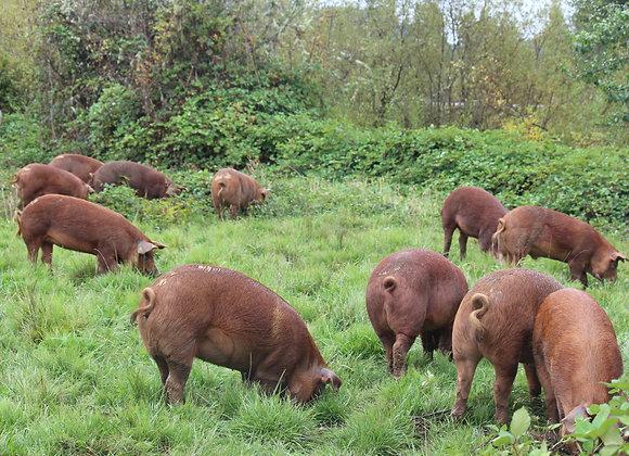 Pasture Raised 1/2 Pork Deposit