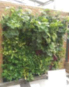 kamling vertical garden