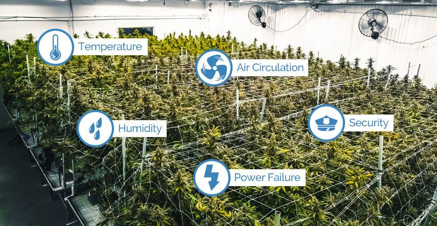 CannabisGrowingFacilities.jpg