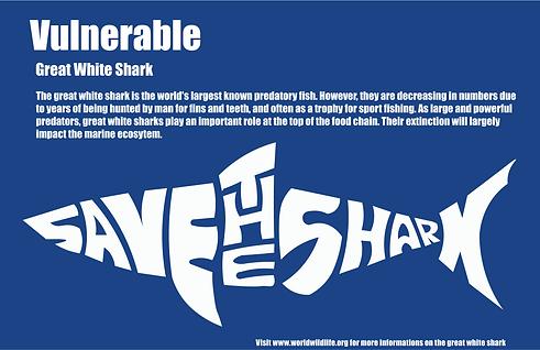 Shark Final.png