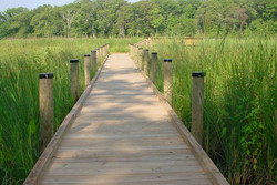 marsh boardwalk.jpg