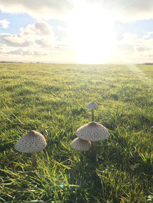 Mushrooms at Bolberry Down